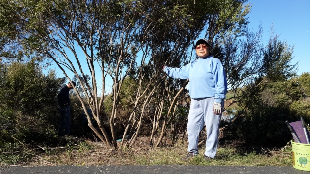 Fran worked on pruning this coyote bush next to the lakeside path